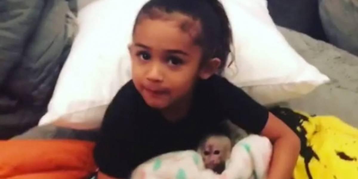 Chris Brown presenteia filha com macaquinha e divide opiniões