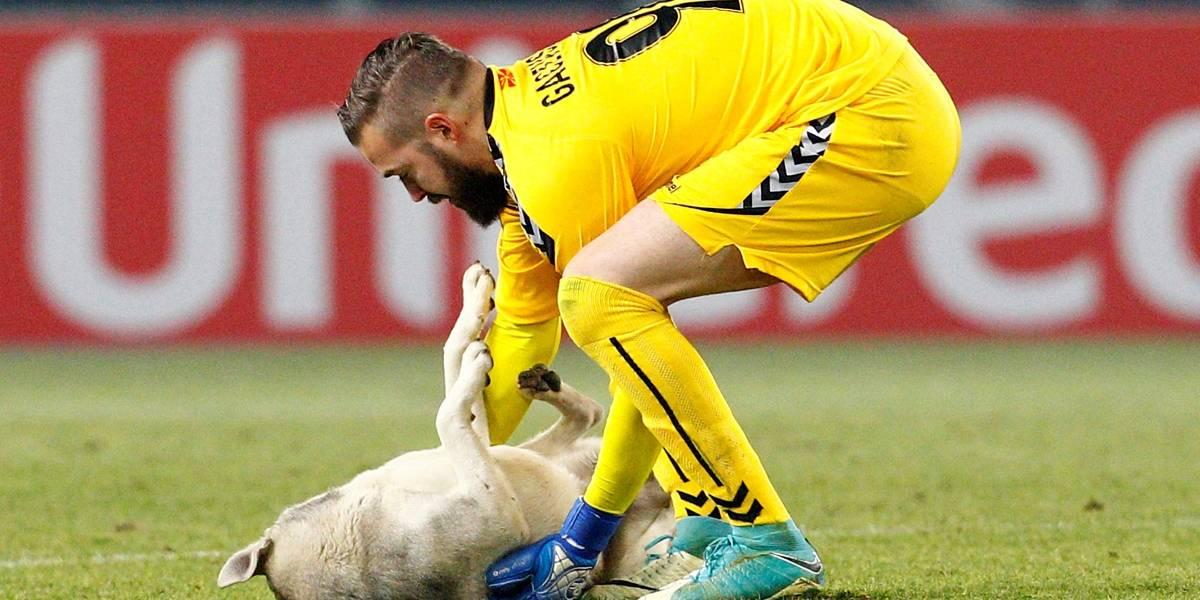 Cão invade campo em jogo da Liga Europa e diverte público