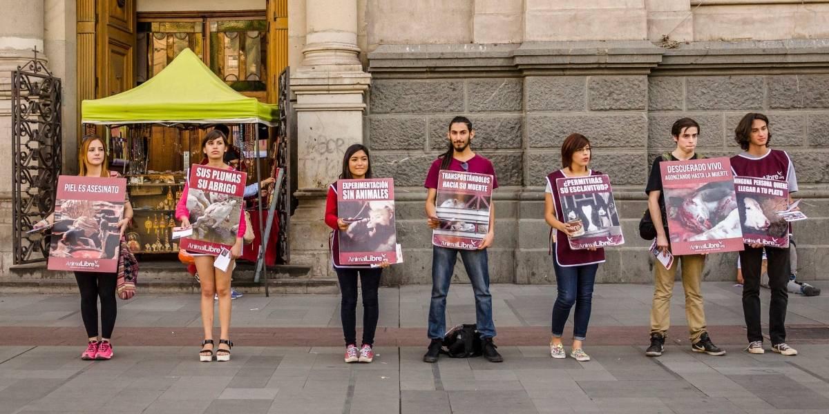 Día Internacional de los Derechos de los Animales: Concentración en Santiago para crear conciencia sobre el maltrato animal