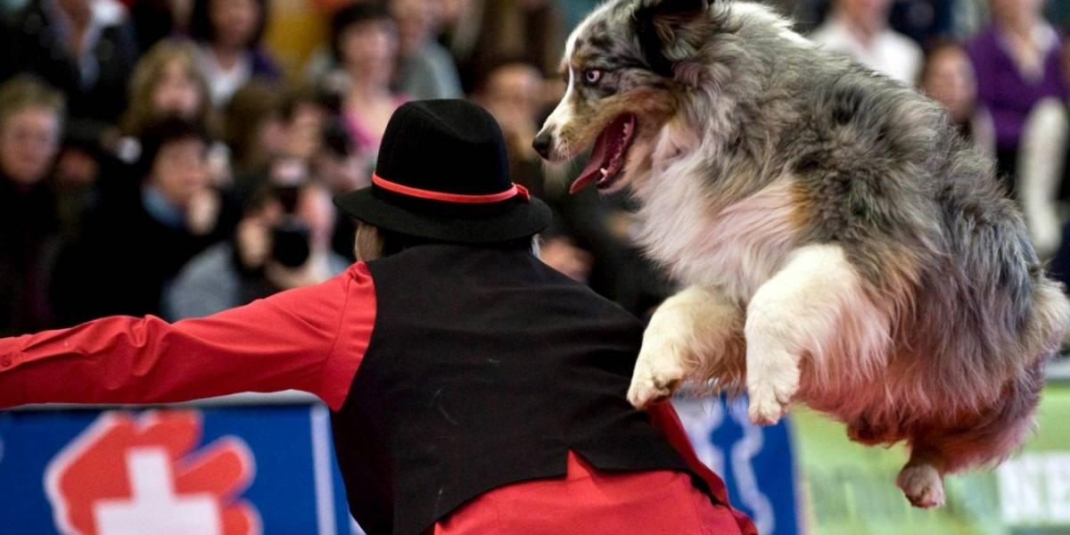 ¿Por qué es importante entrenar a su perro para que sea obediente?