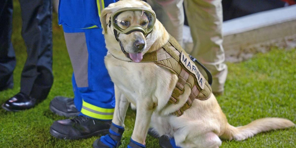 CMLL ofrecerá función en homenaje a los binomios caninos y rescatistas del 19S