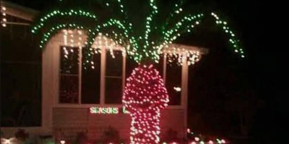 ¿Por qué no hay que decorar las palmeras con luces de Navidad? la imagen viral de Twitter que entrega la respuesta