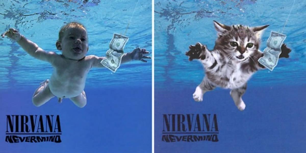Cambian famosas portadas de discos por gatitos y el resultado es encantador