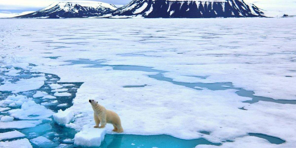 Con los días contados: estudio asegura que debido al cambio climático los osos polares podrían extinguirse dentro de 40 años