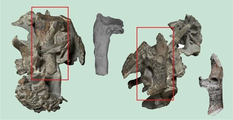 Fósil de pingüino prehistórico