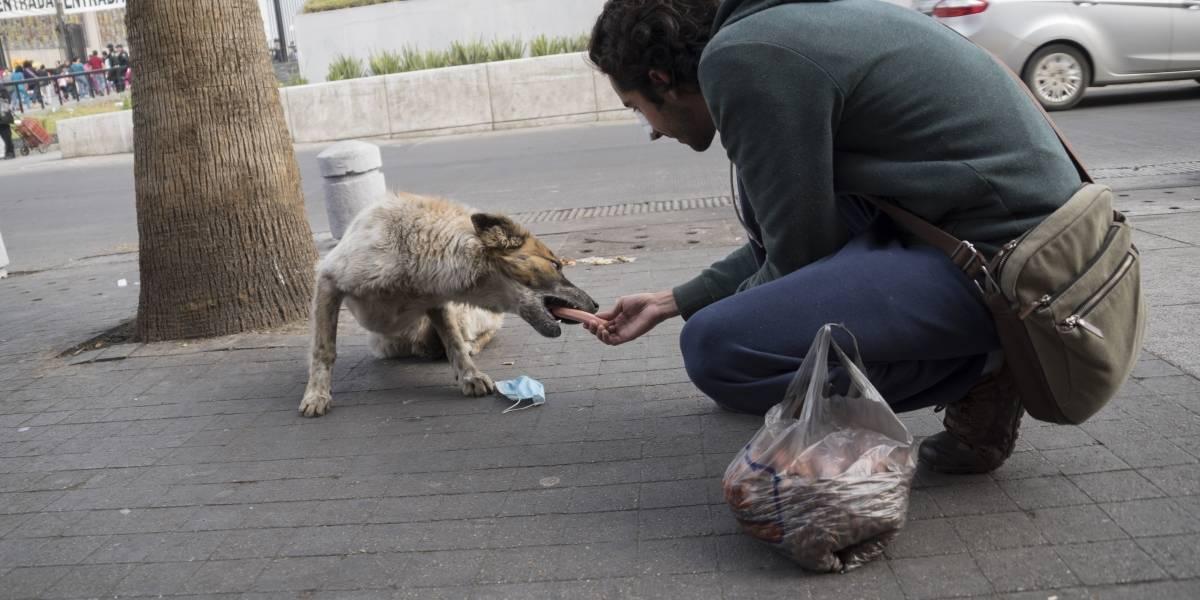 'Perros peregrinos' continúan sufriendo abandono y olvido de las personas