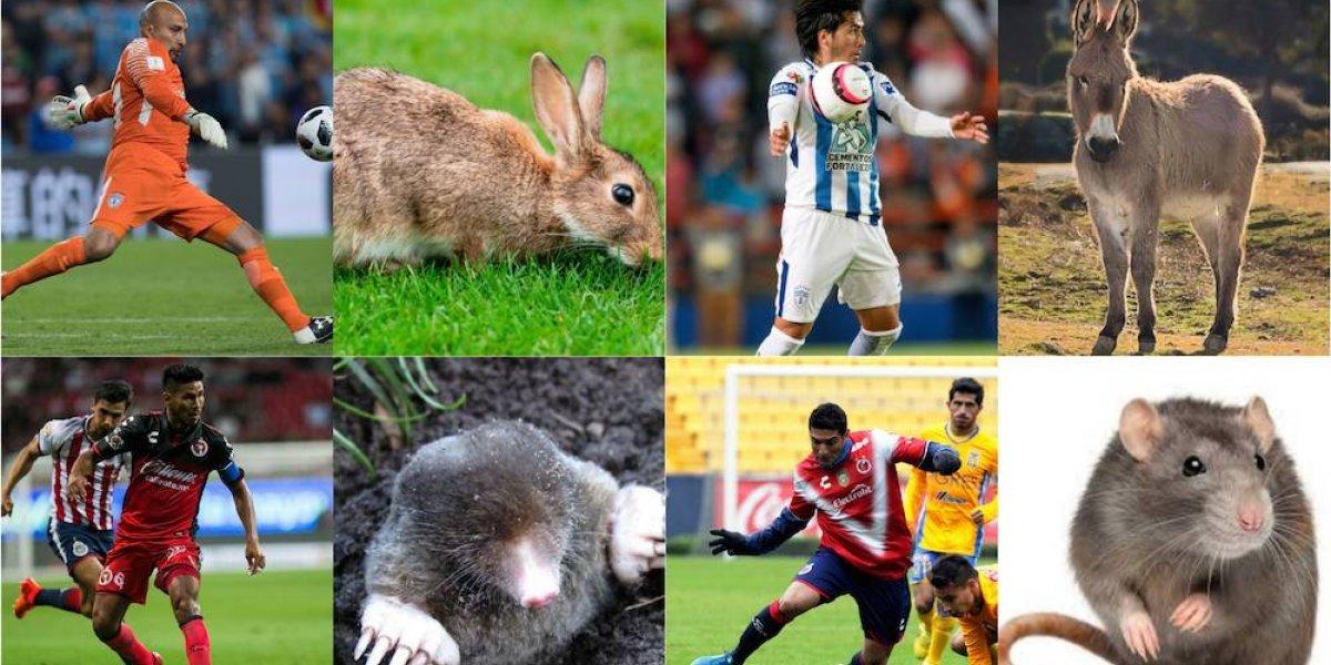 FOTOS: Los 'animales' del futbol mexicano