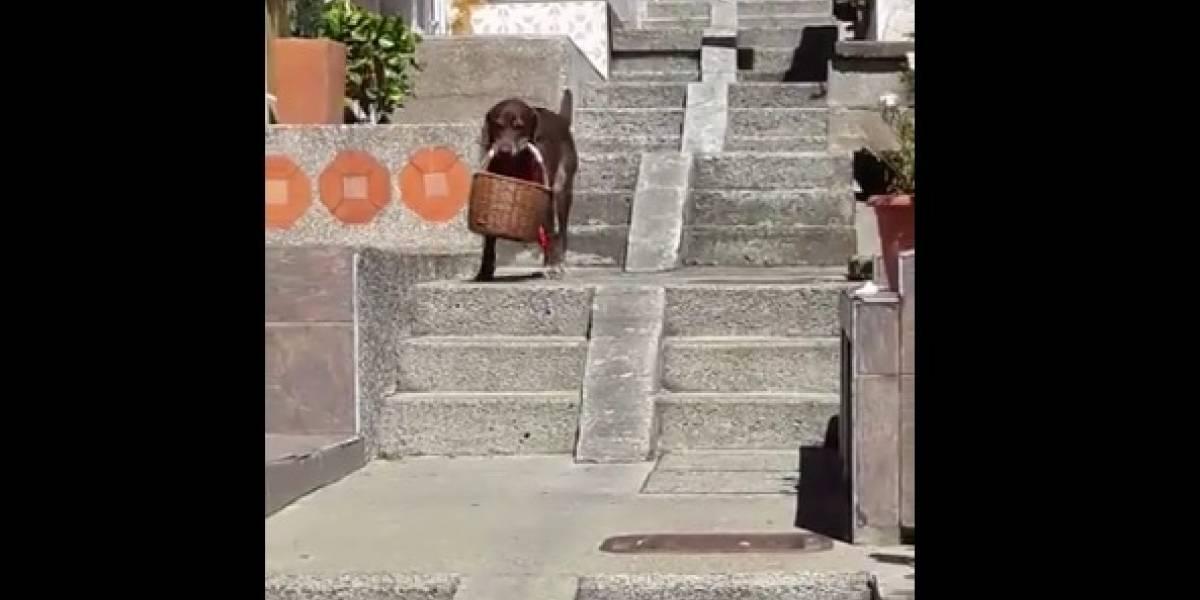 ¡Qué ternura! En Medellín, un perro es el domiciliario de un minimercado