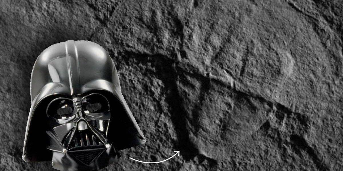 Cangrejo prehistórico recibe nombre en honor a Darth Vader