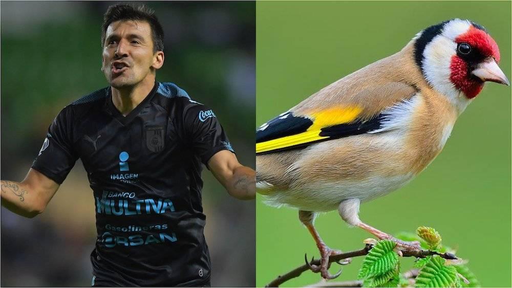 "Édgar ""Pájaro"" Benítez, Querétaro"