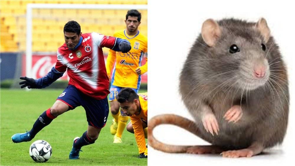 """Martín """"Rata"""" Bravo, Veracruz"""
