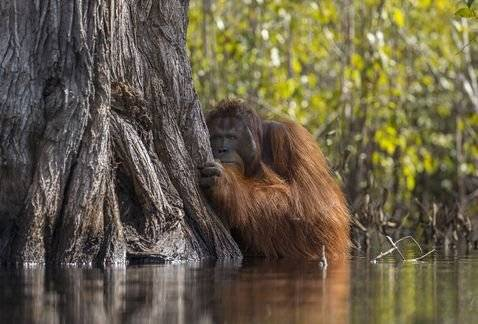 Le immagini vincitrici del concorso National Geographic Photographer of the Year 2017