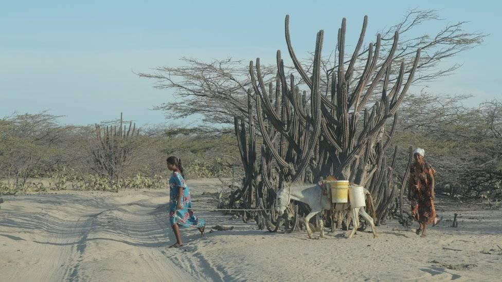 El árido desierto de la Alta Guajira, tierra de la comunidad indígena wayuu, donde la falta de agua y alimentos ha causado graves crisis. (Foto: Natalio Cosoy/ BBC Mundo) BBC