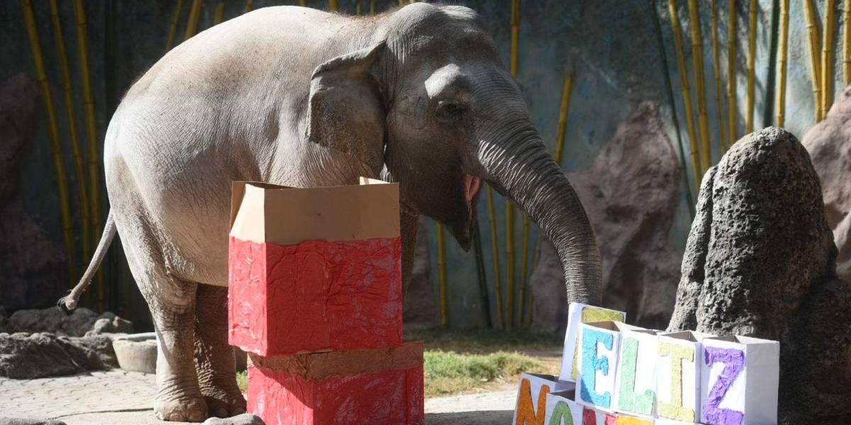 La Navidad llega al zoo La Aurora con regalos para todos los animales