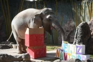 Trompita recibe su regalo de Navidad en La Aurora