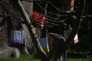 Animales reciben regalos en La Aurora