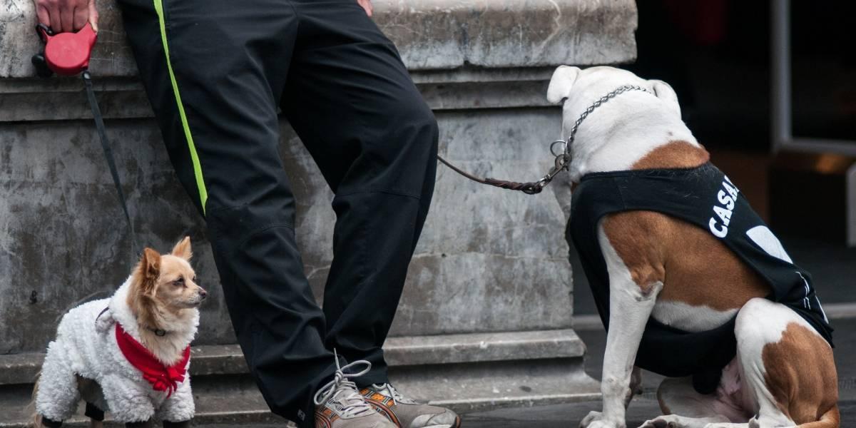 Estas enfermedades le pueden dar a tu perro por el frío