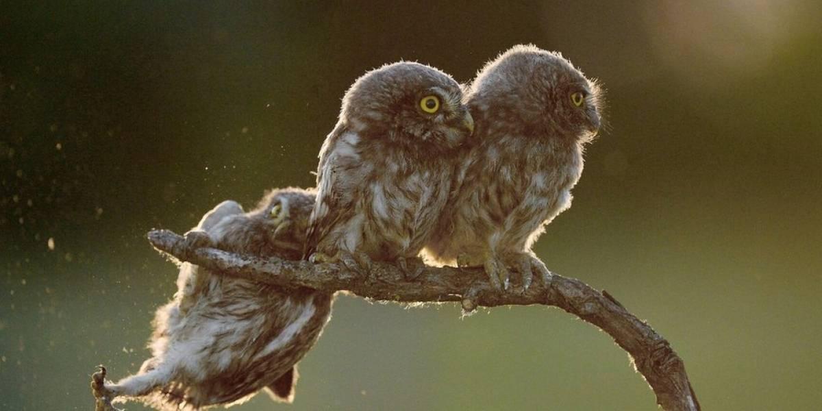 Os cômicos flagras da vida selvagem vencedores de prêmio de fotografia animal