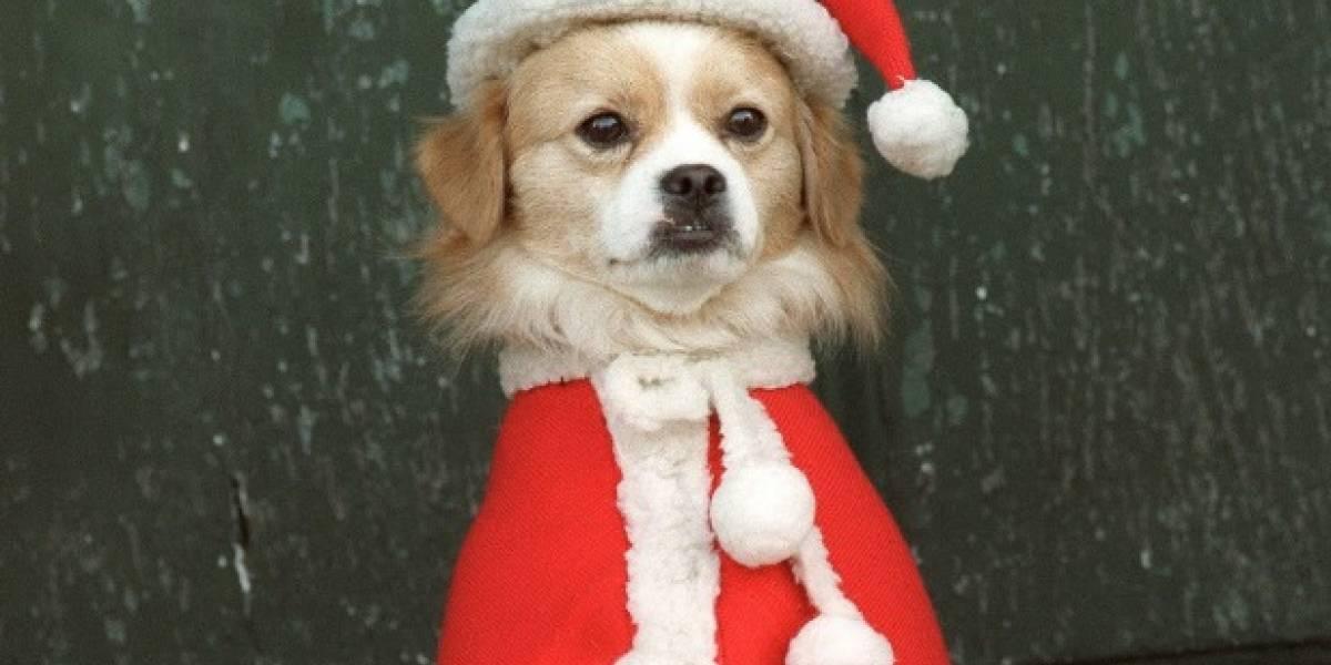 Cuatro peligros de los que debe cuidar a su perro en navidad