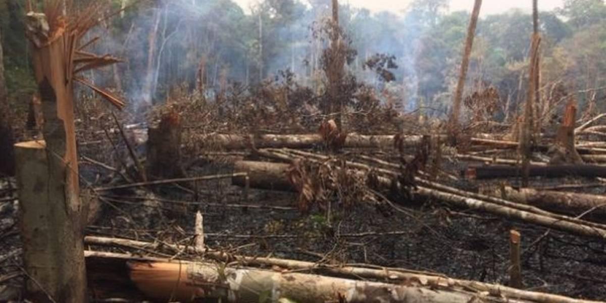 Coordenadora do Inpe que monitorava desmatamento na Amazônia é exonerada