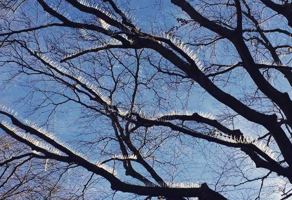 Árvore e Espinhos