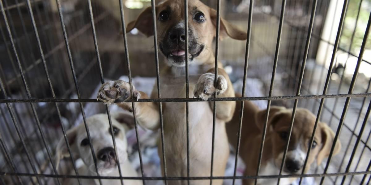Cientos de animales son abandonados en Puerto Rico tras huracán