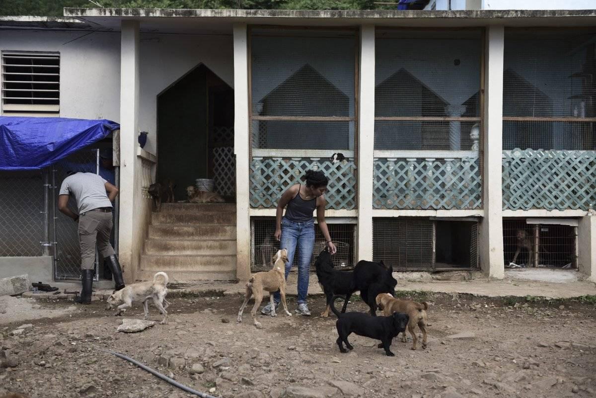 AP Foto/Carlos Giusti En esta imagen del 15 de diciembre de 2017, voluntarios trabajando en el Canita Sanctuary, que protege a perros y gatos de la eutanasia, en Guayama, Puerto Rico.