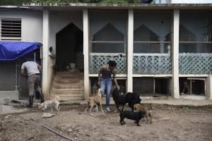 En esta imagen del 15 de diciembre de 2017, voluntarios trabajando en el Canita Sanctuary, que protege a perros y gatos de la eutanasia, en Guayama, Puerto Rico.