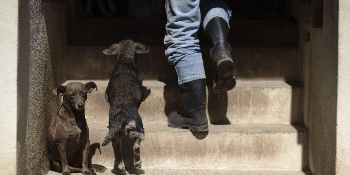 Aumenta cifra de animales abandonados tras María
