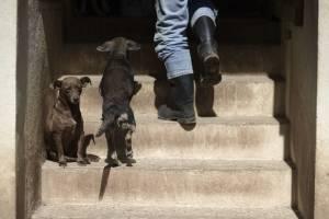 En esta imagen del 15 de diciembre de 2017, cachorros moviéndose libres por el Canita Sanctuary, que protege a perros y gatos de la eutanasia, en Guayama, Puerto Rico.