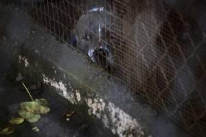 En esta imagen del 15 de diciembre de 2017, un perro rescatado en un recinto en el Canita Sanctuary, donde se protege a perros y gatos abandonados de la eutanasia, en Guayama, Puerto Rico.