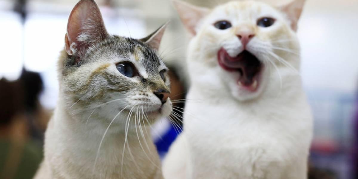 El asesino en serie de gatos continúa desatado en Inglaterra: ya van 400 víctimas