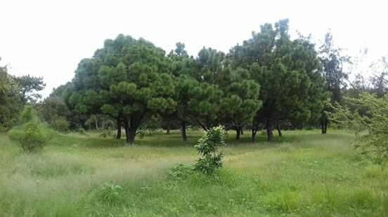 Luchan vecinos de colonia tapatía para que no destruyan su bosque