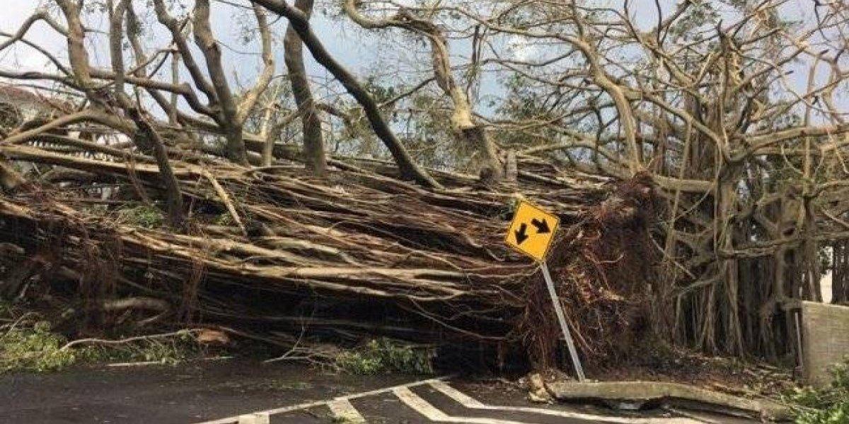 Gobierno Puerto Rico revisará caso a caso las muertes tras huracán María