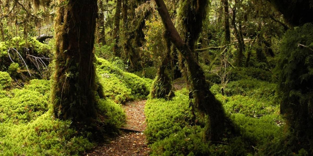 5 temas medioambientales pendientes para el próximo Gobierno
