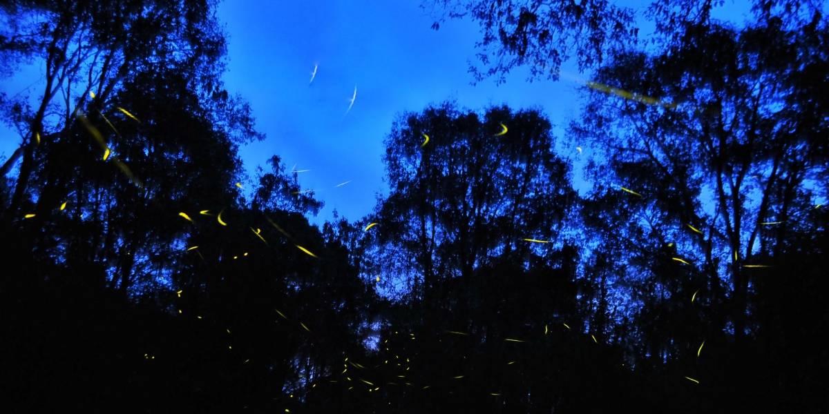Necesaria política forestal para proteger los bosques del país: UNAM