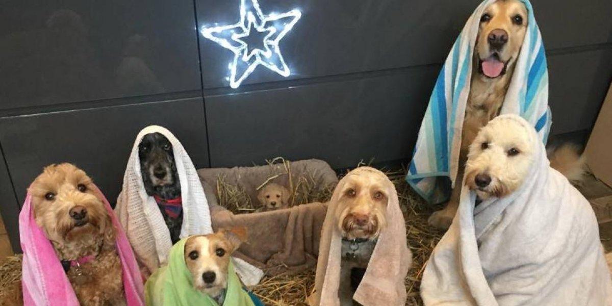 ¡Awwwwww! Esta es la mejor foto de navidad y si no te contagias con el espíritu eres todo un grinch