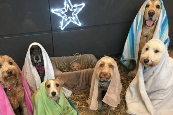 perritos pesebre