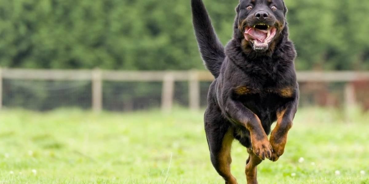 Le robaron ocho perros y el apartamento a una persona en Bogotá