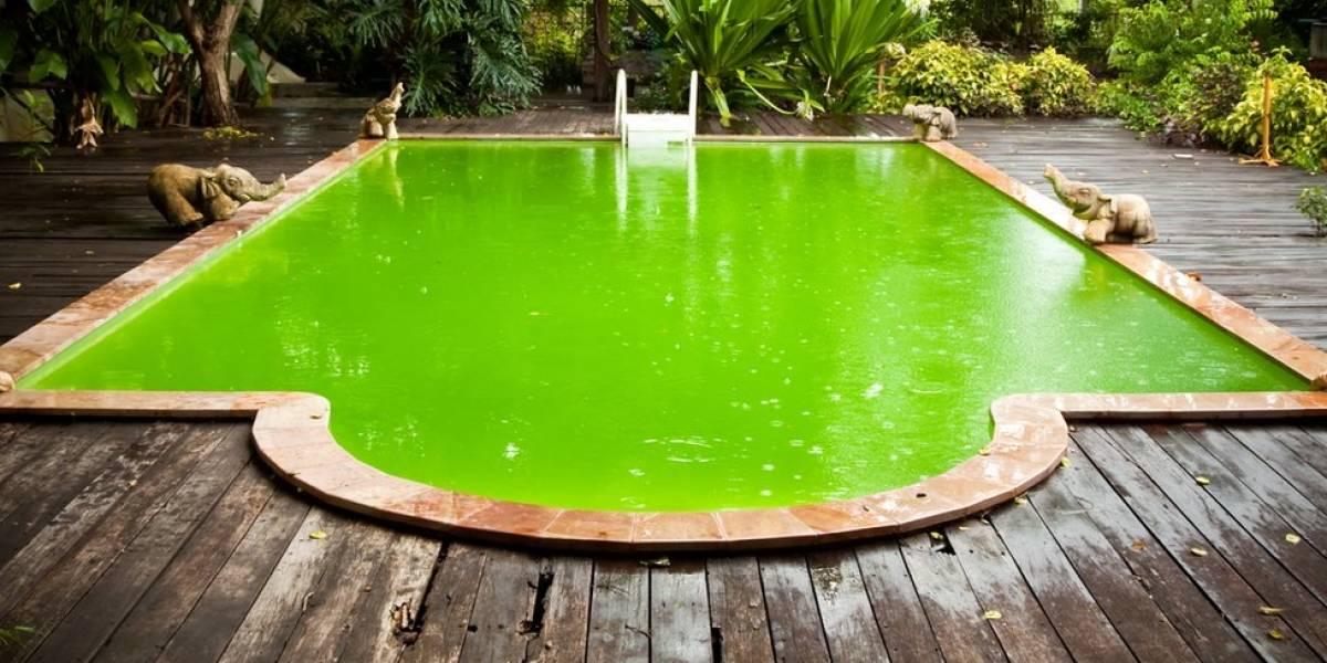 As doenças que você pode pegar em piscinas malcuidadas - e como se proteger