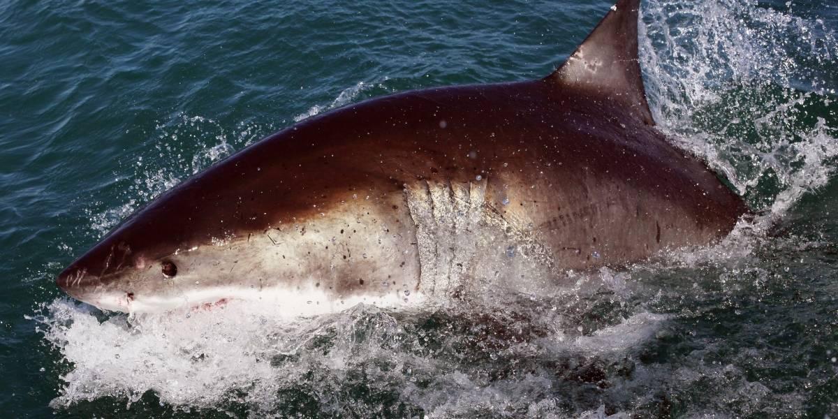 Video: Actriz grababa sensual escena en el mar y... ¡la mordió un tiburón!