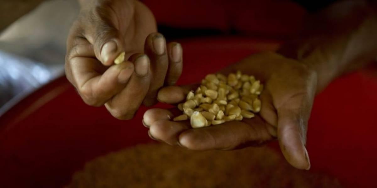 Comerciantes reportan incremento en el precio de maíz y arroz