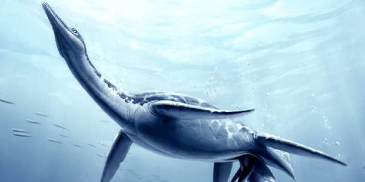 Hallan restos de plesiosaurio que vivió hace unos 150 millones de años