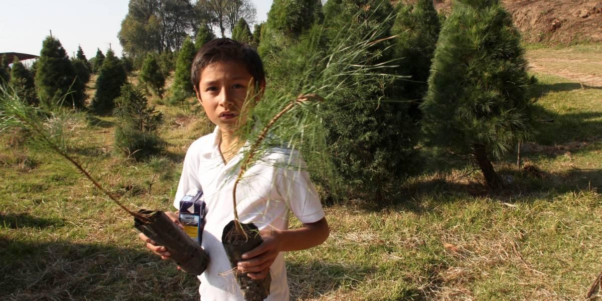 CDMX, tierra fértil para árboles de Navidad sustentables