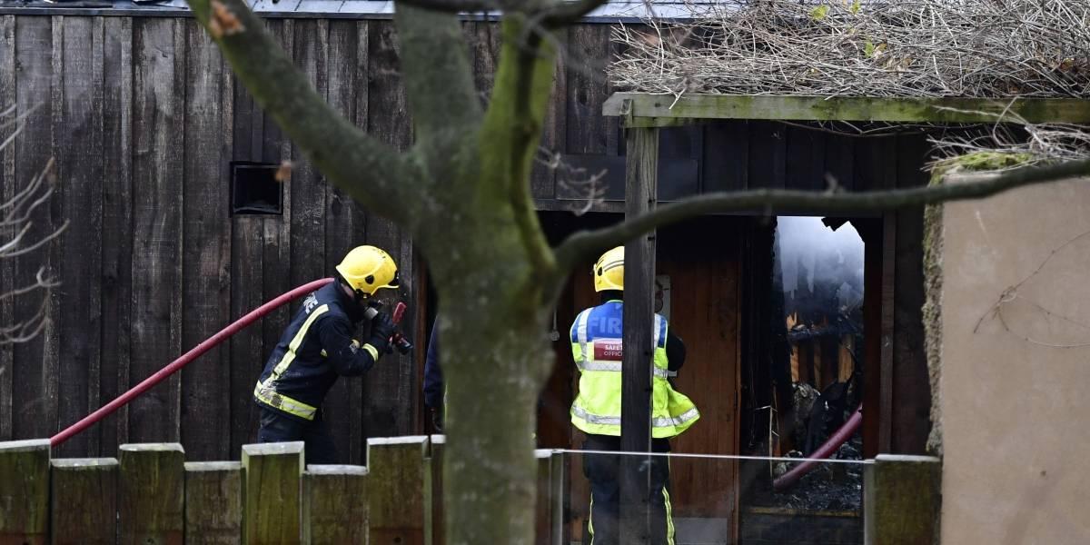 Muere un animal tras incendió en zoológico de Londres