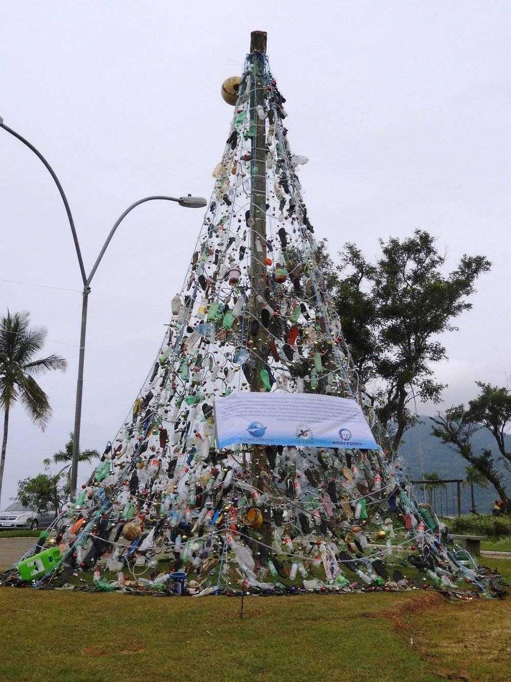 árvore lixo Ubatuba