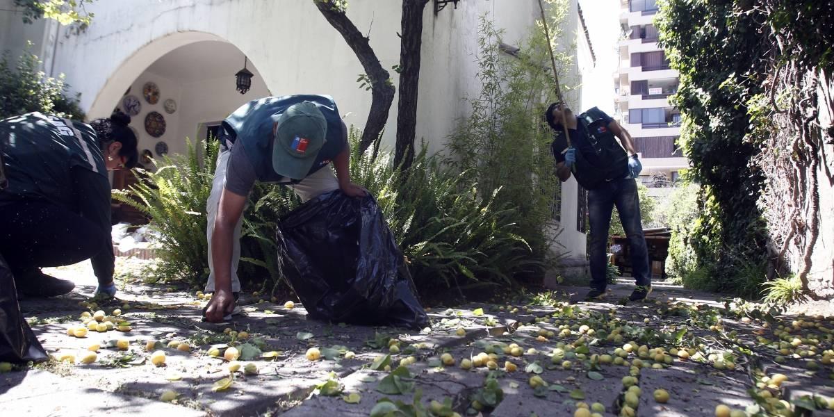 SAG con Municipalidad de Las Condes inician operativo por mosca de la fruta