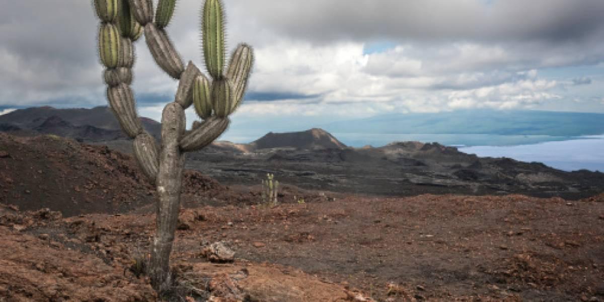 Advierten de intrusión de magma en el volcán Sierra Negra, en las Galápagos