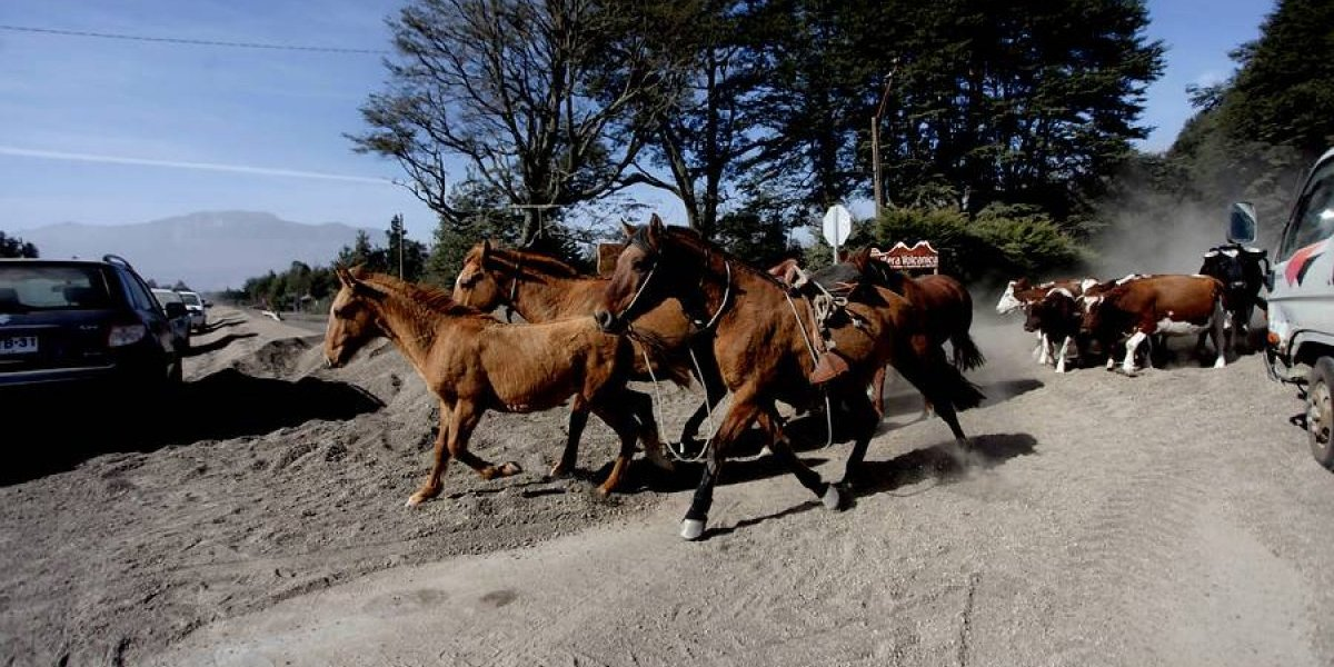 Despreciable regalo navideño: Secretario del Tesoro de EEUU recibió paquete con excremento de caballo