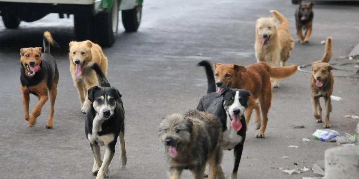 Más de 16 millones de animales pasaron Navidad en la calle